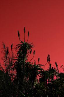 Daniel Simair, red sky (Swaziland, Africa)