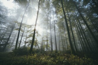 Patrick Monatsberger, Forest Therapy (Germany, Europe)