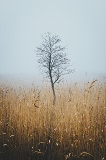 Patrick Monatsberger, Solo Tree Embraced By Fog (Deutschland, Europa)