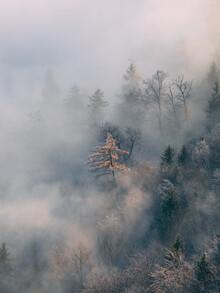 Sebastian 'zeppaio' Scheichl, Frosty trees (Austria, Europe)