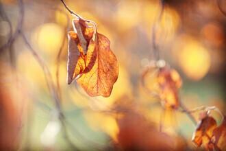 Torsten Kupke, Autumn Spirit (Germany, Europe)
