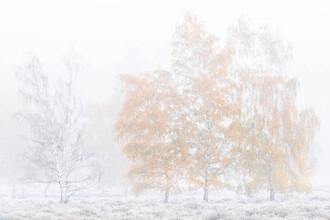 Felix Wesch, Kalter Herbstmorgen (Deutschland, Europa)