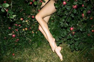 Linas Vaitonis, The Cider House Legs (Lithuania, Europe)