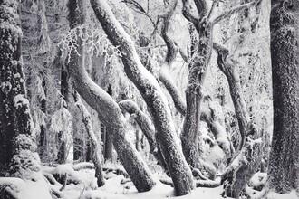 Alex Wesche, Winter Labyrinth (Germany, Europe)