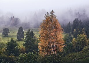 Alex Wesche, Bergwald im Nebel (Schweiz, Europa)