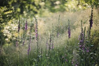 Nadja Jacke, Larkspur and grass (Germany, Europe)