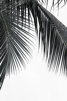 Manuel Schaffernak, Palm (Sri Lanka, Asien)