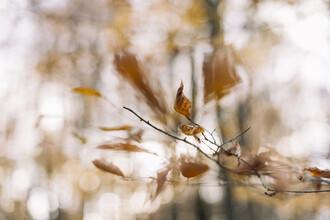 Nadja Jacke, dry beech leaves (Germany, Europe)