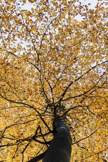 Nadja Jacke, Buche mit Herbstlaub (Deutschland, Europa)