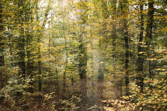 Nadja Jacke, Herbst im Teutoburger Wald (Deutschland, Europa)