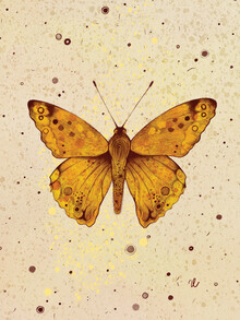 The Artcircle, Butterfly by Justyna Caputa (Poland, Europe)