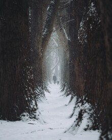André Alexander, Walking along the enchanted forest (Germany, Europe)