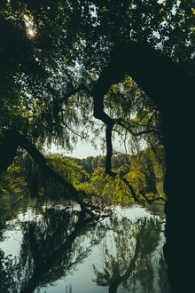Robert Hagstotz, Dschungel (Deutschland, Europa)