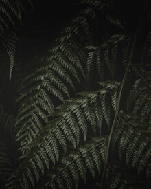 Laura Zimmermann, Farn im Dunkeln 6 (Portugal, Europa)