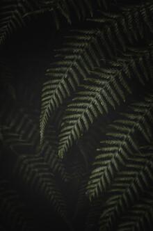 Laura Zimmermann, Farn im Dunkeln (Portugal, Europa)