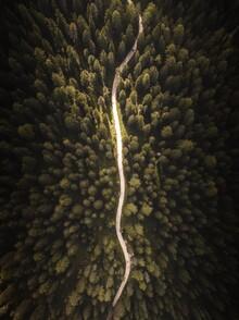 Laura Zimmermann, Waldpfad von oben (Italien, Europa)
