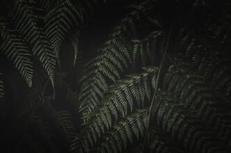 Laura Zimmermann, Farn im Dunkeln 4 (Portugal, Europa)