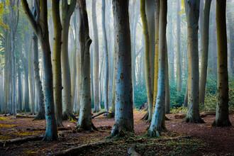 Martin Wasilewski, Herbst im Gespensterwald (Deutschland, Europa)