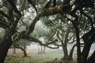 Steffen Schulte-Lippern, Madeira Trees 2 (Portugal, Europe)