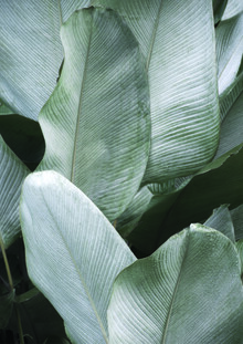 Studio Na.hili, Tropical Silver Leaves (Indonesia, Asia)