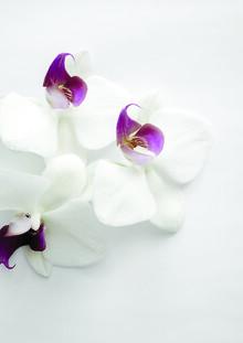 Studio Na.hili, White Wild Orchid (Germany, Europe)