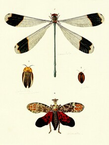 Vintage Nature Graphics, Deagonfly, Beetle, Butterfly (Germany, Europe)