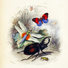 Vintage Nature Graphics, Dragonfly, Butterfly, Beetle 2 (Germany, Europe)