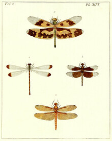Vintage Nature Graphics, Four Dragonflies (Germany, Europe)