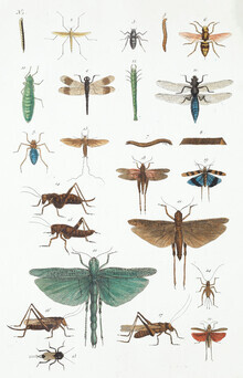 Vintage Nature Graphics, Insects (Germany, Europe)