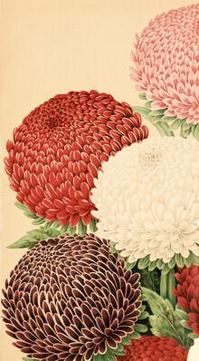 Vintage Nature Graphics, Vintage Illustration Chrysanthemums 4 (Germany, Europe)