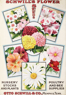 Vintage Nature Graphics, Schwill's Flower Seeds (Germany, Europe)