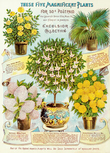 Vintage Nature Graphics, These Five Magnificent Plants For 50 ¢ (Germany, Europe)
