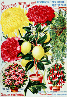 Vintage Nature Graphics, Success With Flowers (Germany, Europe)