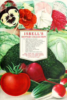Vintage Nature Graphics, Chrysanthemums Vintage Illustration (Germany, Europe)