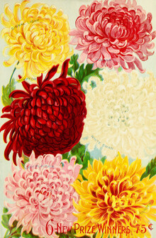 Vintage Nature Graphics, 6 New Prize Winners - Floral Illustration (Germany, Europe)