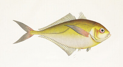 Vintage Nature Graphics, Fish 4 (Germany, Europe)