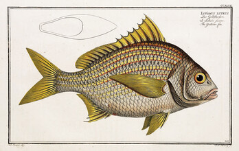 Vintage Nature Graphics, Fish 7 (Germany, Europe)