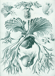 Vintage Nature Graphics, Filicinae (Germany, Europe)