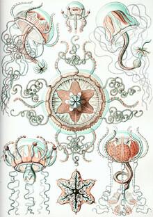 Vintage Nature Graphics, Trachomedusae (Germany, Europe)