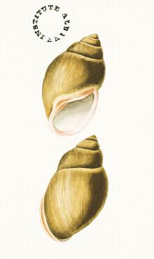 Vintage Nature Graphics, Vintage Illustration Shells 6 (Germany, Europe)