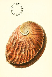 Vintage Nature Graphics, Vintage Illustration Shell (Germany, Europe)