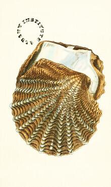 Vintage Nature Graphics, Vintage Illustration Shell 2 (Germany, Europe)