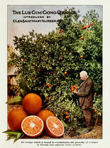 Vintage Nature Graphics, The Lue Gim Gong Orange (Germany, Europe)