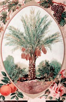 Vintage Nature Graphics, Vintage illustration of a palm tree (Germany, Europe)