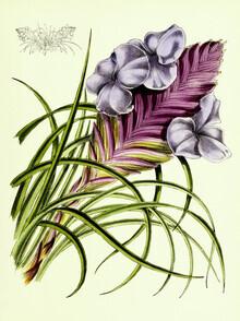 Vintage Nature Graphics, Vintage Illustration Tillandsia 4 (Germany, Europe)