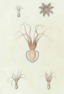 Vintage Nature Graphics, Vintage Illustration Sepia (Germany, Europe)