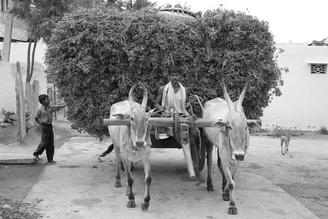 Jml Laufs, Agriculture (India, Asia)