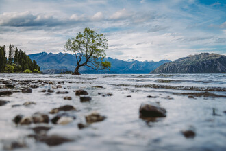 Jessica Wiedemann, Wanaka Tree (New Zealand, Oceania)