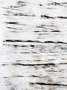 Manuela Deigert, Winterbäume (Deutschland, Europa)