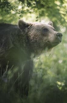 Max Saeling, Lächelnder Bär (Deutschland, Europa)